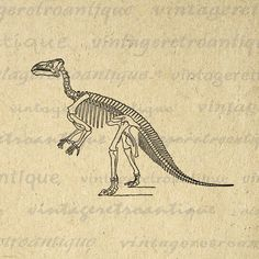 Printable Graphic Dinosaur Skeleton von VintageRetroAntique auf Etsy, $3.50