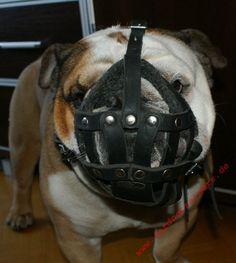 Bulldogge Maulkorb Leder