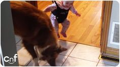 Dog Teaches Baby to Jump   Shadow Attack (1 min)