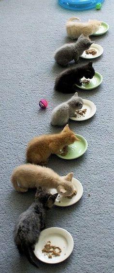 Pretty Kitty's all in a Row!! http://hellokittystore.biz/