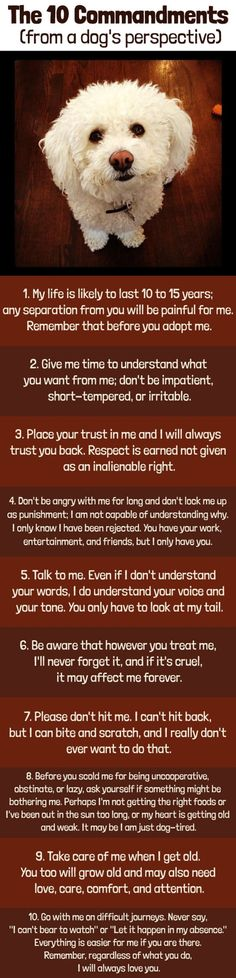 Awww, I love my baby boy, Macnoodle.   The Ten Commandments (from a dog's perspective.)