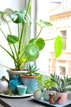 Garden Balcony Plants Planters 50 Ideas For 2019 Small Balcony Garden, Balcony Plants, House Plants Decor, Indoor Garden, Indoor Plants, Balcony Ideas, Plants On Window Sill, Window Sill Decor, Indoor Flowers