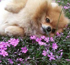 Ahhhh spring!