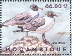 Laughing Gull stamps - mainly images - gallery format