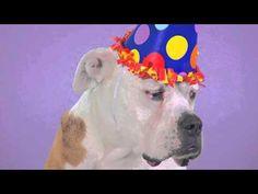 Happy Birthday! E-card - YouTube