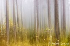 Magic Forest by Helena Ludwig