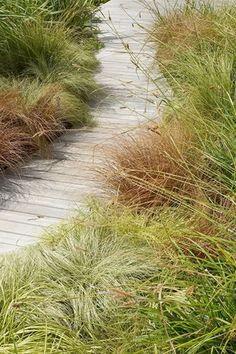 Grasses & boardwalk lead to a great adventure in the garden - Franchesca Watson House Landscape, Landscape Architecture, Landscape Design, Garden Design, California Garden, Beach Design, Am Meer, Ornamental Grasses, Dream Garden