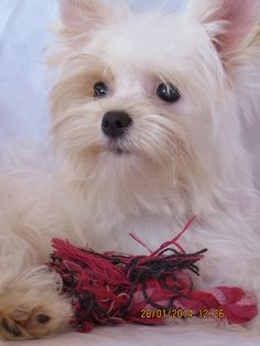 Animal and Pet Travel Agency - your trusted Pet Transport solution in South Africa . moving pets since Pet Transport, Love Fairy, Pet Travel, Maltese, Animals And Pets, Best Dogs, Animal Pictures, Fairies, Africa