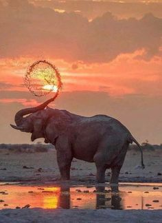 Best Elephant Photos You Never Seen Before - Animals Comparison Nature Animals, Animals And Pets, Baby Animals, Cute Animals, Baby Hippo, Wildlife Nature, Animals Images, Funny Animals, Elephant Photography