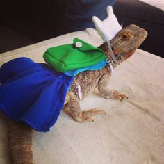 adventure time 'finn' costume Bearded dragon by Monstertrims