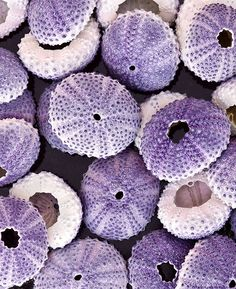 Urchin Shells by Henry Domke - Purple is royalty, magic, mystery, love… Soft Purple, Purple Haze, Shades Of Purple, Mauve, All Things Purple, Summer Colors, Textures Patterns, Color Inspiration, Sea Shells