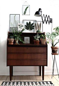 Interior Plants | Dresser Styling