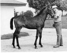Seattle Slew. One of the greatest race horses of all time!