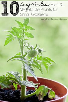 Easy To Grow Fruit amp; Vegetable Plants for Small Gardens - 10 Easy To Grow Fruit amp; Vegetable Plants for Small Easy To Grow Fruit amp; Vegetable Plants for Small Gardens Easy Vegetables To Grow, Planting Vegetables, Fruits And Vegetables, Vegetable Gardening, Plants For Small Gardens, Garden Plants, Olive Garden, Edible Garden, Growing Plants