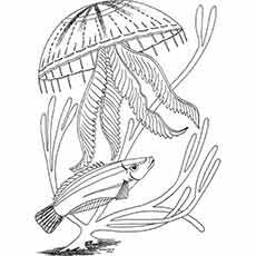 Pin on jellyfish