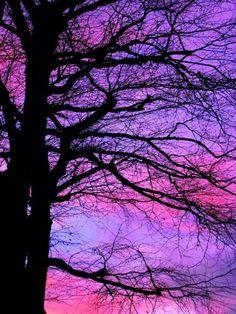 silhouette (via Bethany Joy Holmes) Purple Love, All Things Purple, Purple Rain, Shades Of Purple, Pink, Purple Wall Art, Purple Walls, Way To Heaven, Amazing Sunsets