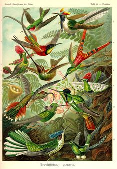 By Ernst Haeckel, science illustrator, from about 1900