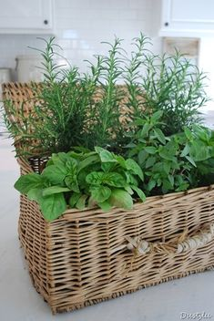 Herbs planted in a basket. - I have a basket like this & I almost gave it away!