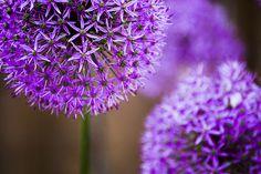 Mês a mês: as flores que deve plantar no jardim