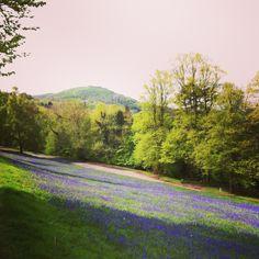 Bluebell view of British Camp, Malvern Hills