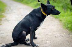Dogs, Animals, Animales, Animaux, Doggies, Animais, Dog, Animal