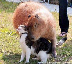 Gatos e suas amizades insólitas Amizade não escolhe raça, gênero, idade e aparência. Basta ser espontânea.  http://gatosmundanos.blogspot.com.br/