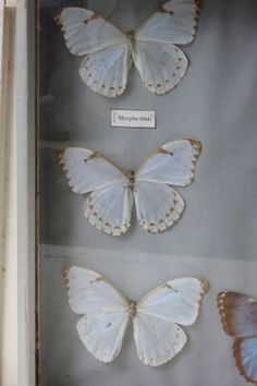 ♕ gorgeous butterfly collection