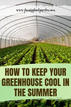 Greenhouses just get hotter and hotter in the summer unless we make an effort to cool them down. Here are some tips and tricks on how to keep your greenhouse cool in the summer. #garden #gardeningtips #homestead #homesteadingtips #plantcaretips #greenhouse #summergardening #summer Large Greenhouse, Backyard Greenhouse, Greenhouse Plans, Greenhouse Farming, Homemade Greenhouse, Greenhouse Growing, Container Gardening, Gardening Tips, Vegetable Gardening