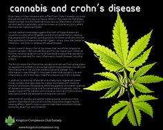 Cannabis and Crohn's Disease