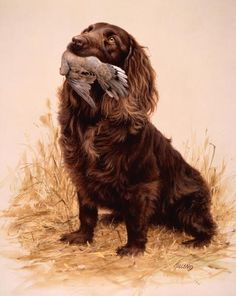 Head of the Class Boykin Spaniel-Dove<br>Limited Edition of 580-14 x 19