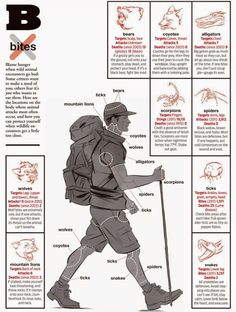 This Infographic Shows How to Prevent Bites from Dangerous Animals