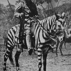 British soldier on a horse in zebra camouflage, German East Africa during WWI.