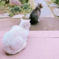 かわいい背中❤️🐾🐾🐾 ♡ #ハリーにゃん #ピュアにゃん #仲良く日向ぼっこ #玄関が好きなにゃんこ #キジトラ #白猫 #愛猫 #猫会議 #今週もがんばるにゃん ##ilovecat #ilovedog #cat #kitten #にゃんこ #にゃんこlove #わんこlove #わんこもにゃんこも好き
