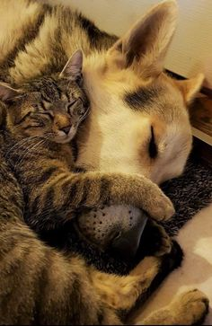Sleeping buddies..