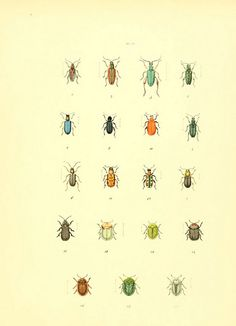 biodiversity heritage library - free prints to frame