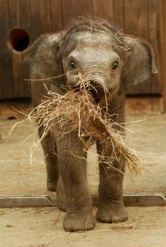Elephants can be farmers too.