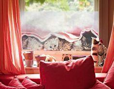 Fensterfolie - Sichtschutz Fenster Sugar-Sweet - Fensterbilder