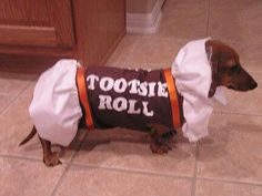 mini dachshund Tootsie Roll costume - for wiener dog, so CUTE! Dachshund Funny, Mini Dachshund, Dachshund Puppies, Cute Puppies, Cute Dogs, Daschund, Dapple Dachshund, Chihuahua Dogs, Lab Puppies