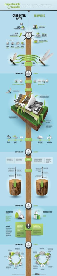 Carpenter Ants and Termites - #Infographic