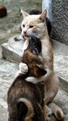 Tiere...und manchmal bester Freund ever... – Sammlungen – Google+
