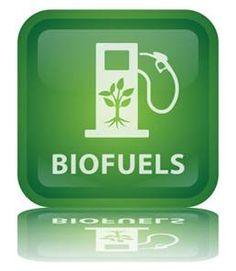 Bio-fuels - what's the verdict?