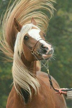 Sassy horse tail toss!