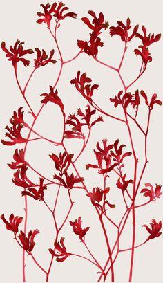 Australian Native Flora by Natalie Ryan ( Kangaroo Paw) Australian Wildflowers, Australian Native Flowers, Australian Plants, Australian Art, Motif Floral, Arte Floral, Botanical Drawings, Botanical Prints, Kangaroo Paw