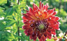 Die meisten Pflanzen im Garten zeigen sich nur wenige Wochen im Jahr von ihrer schönsten Seite – Grund genug, sie rechtzeitig zu fotografieren. Mit diesen Tipps und etwas Übung gelingen Ihnen gute Pflanzenfotos.