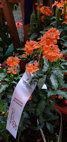Flowers, Royal Icing Flowers, Floral, Florals, Flower, Bloemen, Blossoms