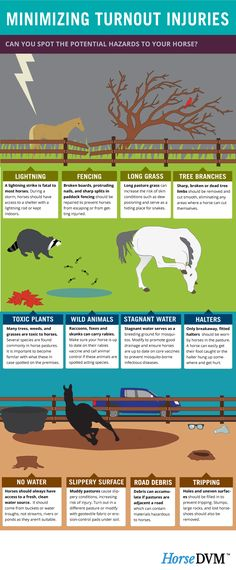 Minimizing horse turnout injuries - An infographic by HorseDVM