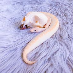 How many of you have been working with or seeing serpent symbolism or dreams lately? Cute Reptiles, Reptiles And Amphibians, Mammals, Pretty Animals, Cute Little Animals, Animals Beautiful, Pretty Snakes, Beautiful Snakes, Funny Animal Memes