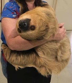 Two Toed Sloth, Sloths, Dogs, Animals, Animales, Animaux, Pet Dogs, Doggies, Animal