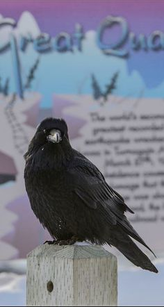 A raven perches on post along Turnagain Arm and the Seward Highway in front of an interpretive sign about the 1964 Good Friday Earthquake on Thursday, Feb. 8, 2018. (Bob Hallinen / ADN)