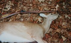 "Nice Georgia doe taken with a Navy Arms Co. flintlock .45-caliber rifle. p. 50. ""X-Treme Muzzleloading."""